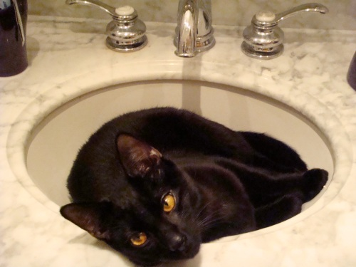 In_the_sink