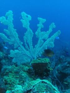 Coral at 70'