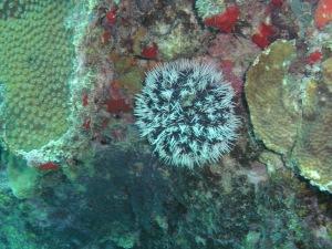 Coral at 40'